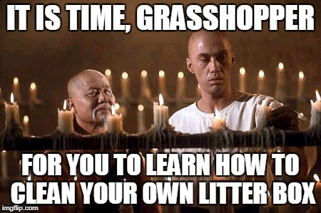 IT IS TIME, GRASSHOPPER FOR YOU TO LEARN HOW TO CLEAN YOUR OWN LITTER BOX | made w/ Imgflip meme maker