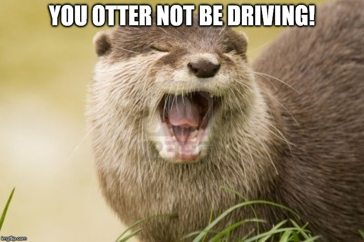 YOU OTTER NOT BE DRIVING! | made w/ Imgflip meme maker