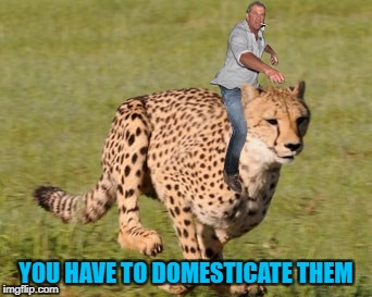 YOU HAVE TO DOMESTICATE THEM | made w/ Imgflip meme maker