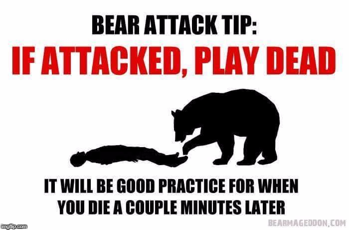 image tagged in bear attack | made w/ Imgflip meme maker