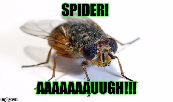 SPIDER! AAAAAAAUUGH!!! | made w/ Imgflip meme maker