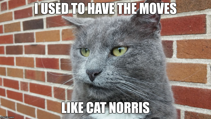 Evil Cat | I USED TO HAVE THE MOVES LIKE CAT NORRIS | image tagged in evil cat | made w/ Imgflip meme maker