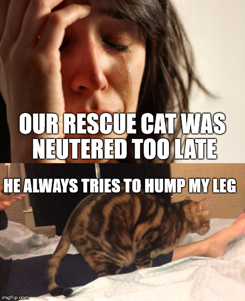 OUR RESCUE CAT WAS NEUTERED TOO LATE HE ALWAYS TRIES TO HUMP MY LEG | made w/ Imgflip meme maker