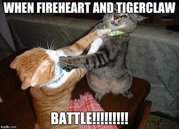 Two cats fighting for real | WHEN FIREHEART AND TIGERCLAW BATTLE!!!!!!!!! | image tagged in two cats fighting for real | made w/ Imgflip meme maker