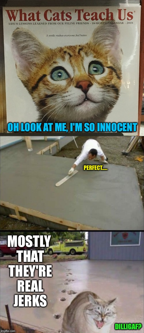I Saw This Calendar At The Mall Last Night. Cats Have Taught Me One Thing. |  OH LOOK AT ME, I'M SO INNOCENT; PERFECT..... MOSTLY THAT THEY'RE REAL JERKS; DILLIGAF? | image tagged in cats,cat meme,yep i dont care,i don't care,cute cat | made w/ Imgflip meme maker