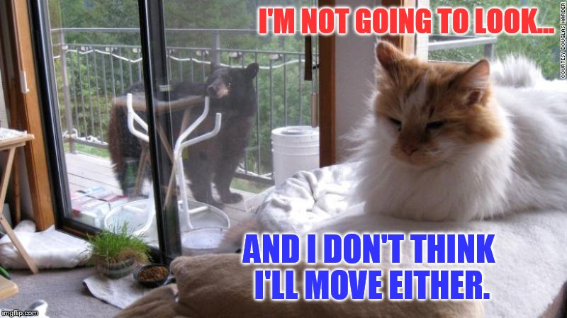 There's a Bear Outside | I'M NOT GOING TO LOOK... AND I DON'T THINK I'LL MOVE EITHER. | image tagged in memes,cat memes,bear,outside,cat,see no one cares | made w/ Imgflip meme maker