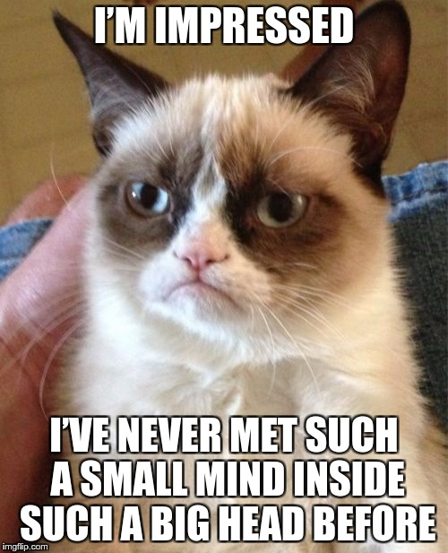 Grumpy Mind | I'M IMPRESSED I'VE NEVER MET SUCH A SMALL MIND INSIDE SUCH A BIG HEAD BEFORE | image tagged in memes,grumpy cat,funny,head,mind,brain | made w/ Imgflip meme maker