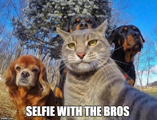 SELFIE WITH THE BROS | image tagged in memes,selfie,bro,dogs an cats | made w/ Imgflip meme maker