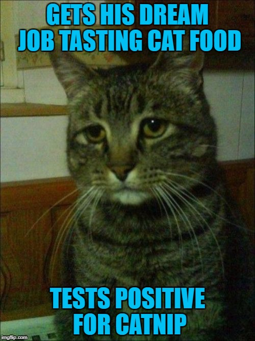 Depressing Meme Week Oct 11-18 A NeverSayMemes Event |  GETS HIS DREAM JOB TASTING CAT FOOD; TESTS POSITIVE FOR CATNIP | image tagged in memes,depressed cat,depressing meme week,funny,cats,animals | made w/ Imgflip meme maker