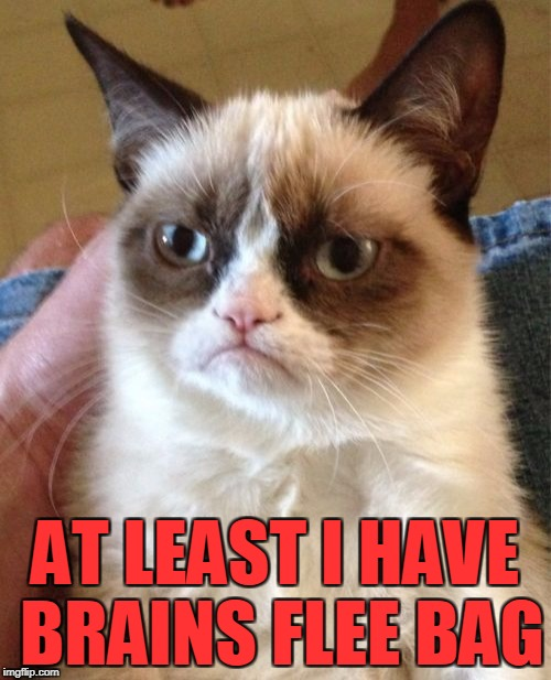 Grumpy Cat Meme | AT LEAST I HAVE BRAINS FLEE BAG | image tagged in memes,grumpy cat | made w/ Imgflip meme maker