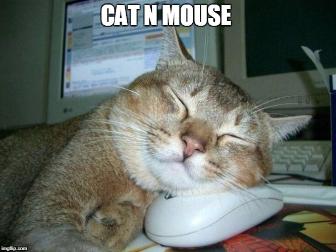 cat n mouse | CAT N MOUSE | image tagged in cat n mouse,cats,mouse | made w/ Imgflip meme maker