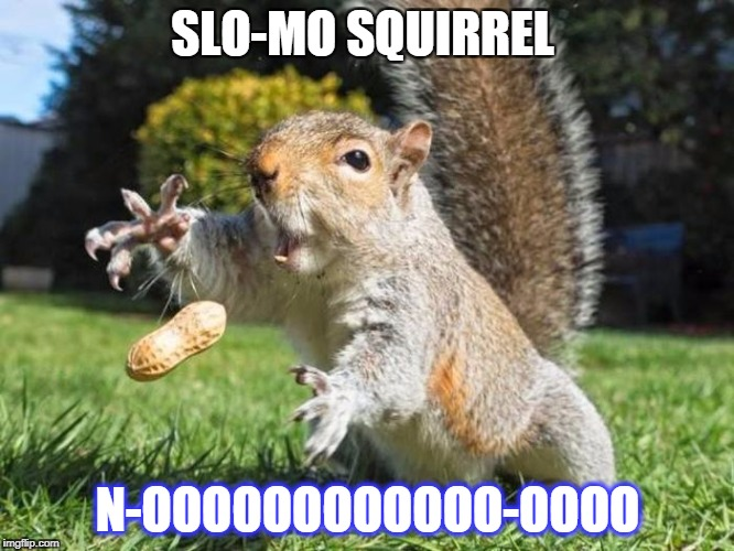 slo-mo squirrel | SLO-MO SQUIRREL N-OOOOOOOOOOOO-OOOO | image tagged in nooooooooooo---oooo-,slow motion,squirrel | made w/ Imgflip meme maker