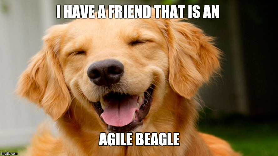 smiling dog | I HAVE A FRIEND THAT IS AN AGILE BEAGLE | image tagged in smiling dog | made w/ Imgflip meme maker