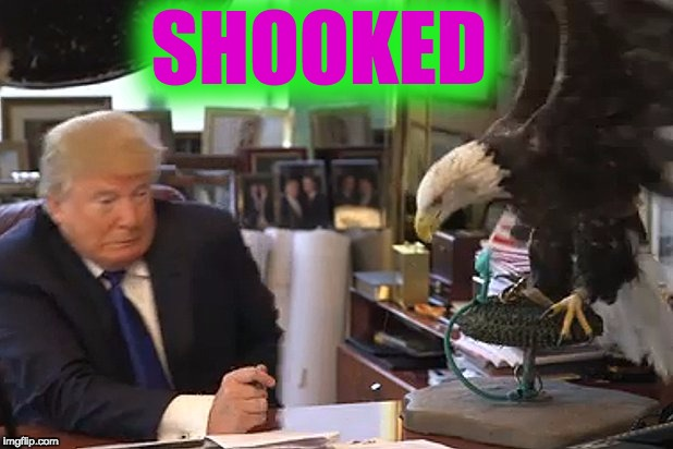 Shooked | SHOOKED | image tagged in shook,donald trump | made w/ Imgflip meme maker