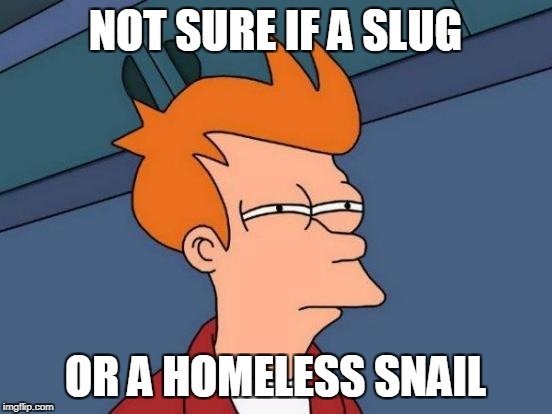 Futurama Fry Meme | NOT SURE IF A SLUG OR A HOMELESS SNAIL | image tagged in memes,futurama fry | made w/ Imgflip meme maker