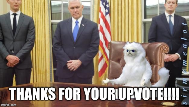 Guardian Cat In Oval Office | THANKS FOR YOUR UPVOTE!!!! | image tagged in guardian cat in oval office | made w/ Imgflip meme maker