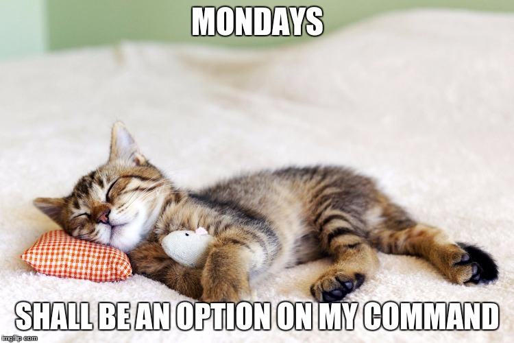 Sleeping cat | MONDAYS SHALL BE AN OPTION ON MY COMMAND | image tagged in sleeping cat | made w/ Imgflip meme maker