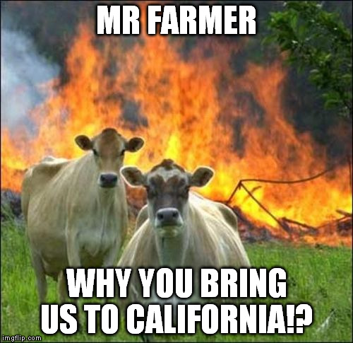 Evil Cows Meme | MR FARMER WHY YOU BRING US TO CALIFORNIA!? | image tagged in memes,evil cows | made w/ Imgflip meme maker