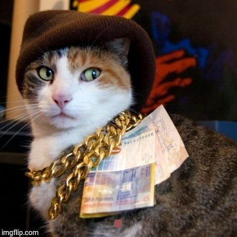 Thug Life | . | image tagged in loyalsockatxhamster,cats,thug life,funny stuff | made w/ Imgflip meme maker