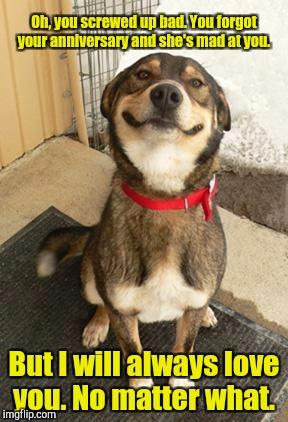 dog smiling big - Imgf...