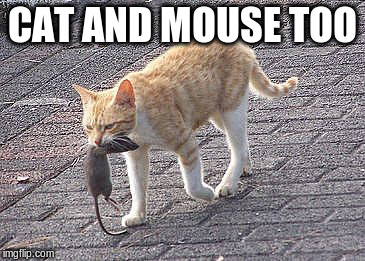 CAT AND MOUSE TOO | made w/ Imgflip meme maker