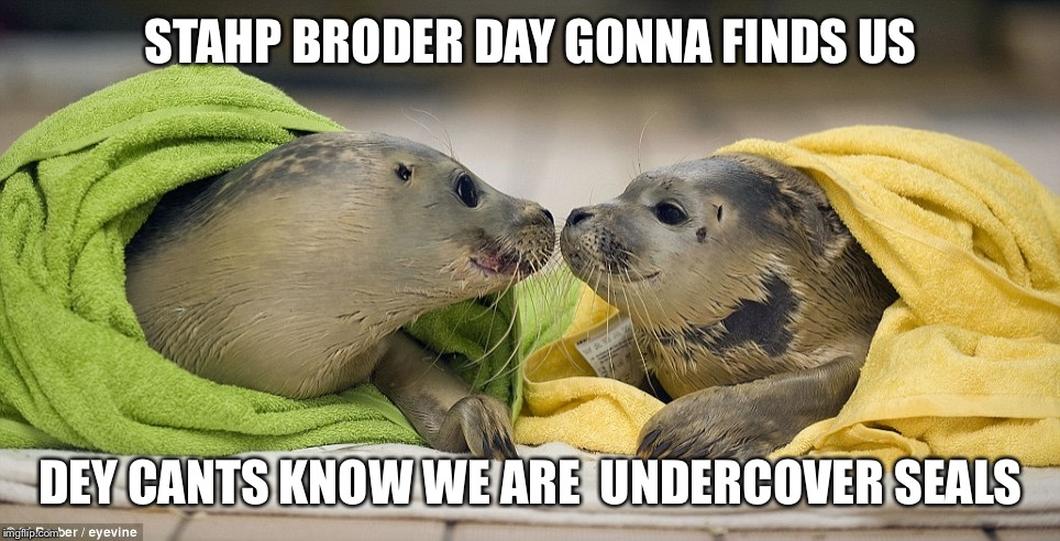STAHP BRODER DAY GONNA FINDS US DEY CANTS KNOW WE ARE  UNDERCOVER SEALS | image tagged in under cover | made w/ Imgflip meme maker