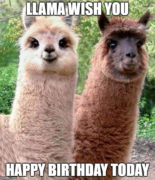 Happy Birthday Llama - Imgflip