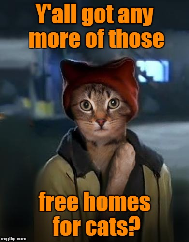 Y'all got any more of those free homes for cats? | made w/ Imgflip meme maker