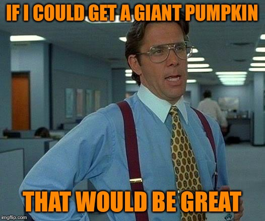 It's the Great Pumpkin Charlie Brown | IF I COULD GET A GIANT PUMPKIN THAT WOULD BE GREAT | image tagged in memes,that would be great,great pumpkin,the best pumpkin,charlie brown,is a pumpkin a fruit vegetable or pie | made w/ Imgflip meme maker