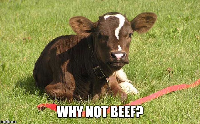 WHY NOT BEEF? | made w/ Imgflip meme maker