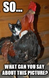Kitten on Chicken | SO... WHAT CAN YOU SAY ABOUT THIS PICTURE? | image tagged in kitten on chicken | made w/ Imgflip meme maker