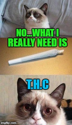 NO...WHAT I REALLY NEED IS T.H.C | made w/ Imgflip meme maker