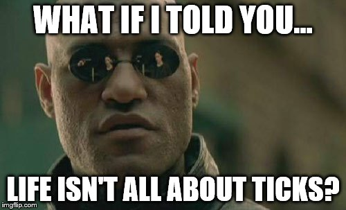 Matrix Morpheus Meme | WHAT IF I TOLD YOU... LIFE ISN'T ALL ABOUT TICKS? | image tagged in memes,matrix morpheus | made w/ Imgflip meme maker