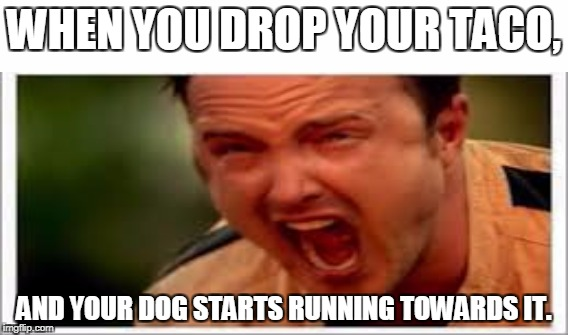 -SOB-SOB- WHY!? I GOT IT FROM TACO BELL, WITH THE BEST BEEF IN THE WOR-, wait, hold on a minute.... | WHEN YOU DROP YOUR TACO, AND YOUR DOG STARTS RUNNING TOWARDS IT. | image tagged in taco no | made w/ Imgflip meme maker