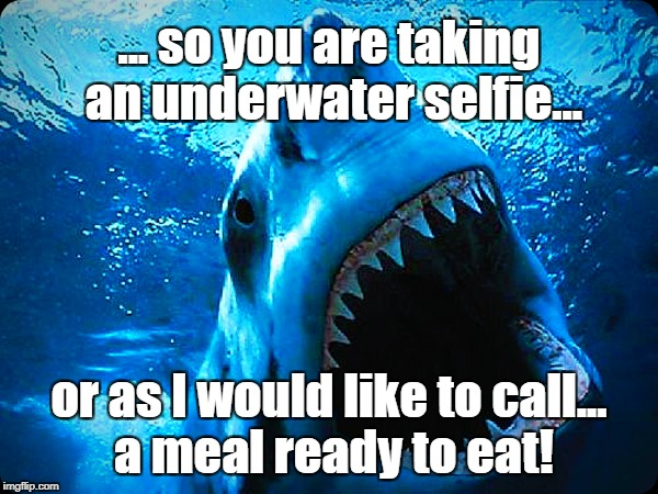 Underwater Meals | ... so you are taking an underwater selfie... or as I would like to call... a meal ready to eat! | image tagged in sharks,funny animals | made w/ Imgflip meme maker