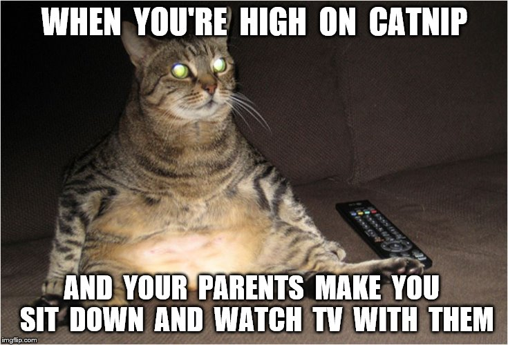 WHEN  YOU'RE  HIGH  ON  CATNIP AND  YOUR  PARENTS  MAKE  YOU  SIT  DOWN  AND  WATCH  TV  WITH  THEM | made w/ Imgflip meme maker