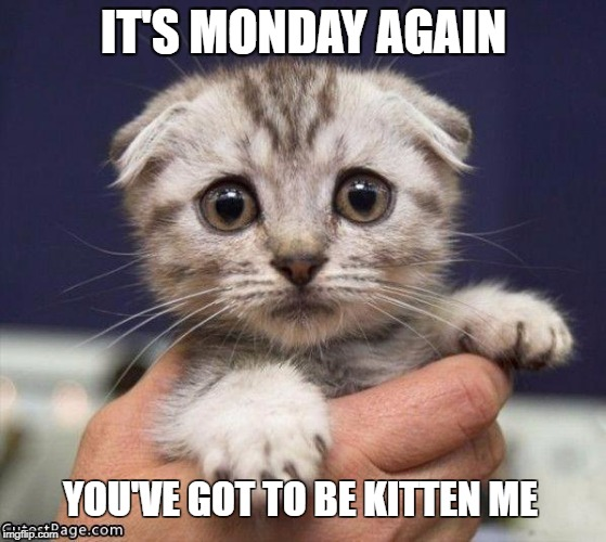SAD CAT | IT'S MONDAY AGAIN YOU'VE GOT TO BE KITTEN ME | image tagged in sad cat | made w/ Imgflip meme maker