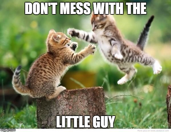 Don't mess with the little guy | DON'T MESS WITH THE LITTLE GUY | image tagged in animals | made w/ Imgflip meme maker