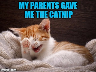MY PARENTS GAVE ME THE CATNIP | made w/ Imgflip meme maker