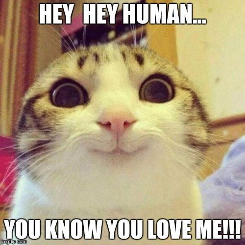 Smiling Cat Meme | HEY  HEY HUMAN... YOU KNOW YOU LOVE ME!!! | image tagged in memes,smiling cat | made w/ Imgflip meme maker