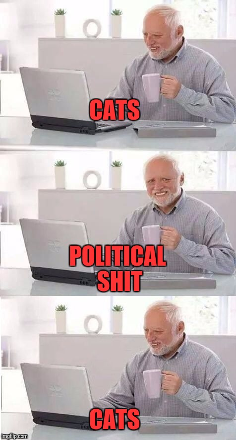 On second thought Harold | CATS CATS POLITICAL SHIT | image tagged in on second thought harold | made w/ Imgflip meme maker