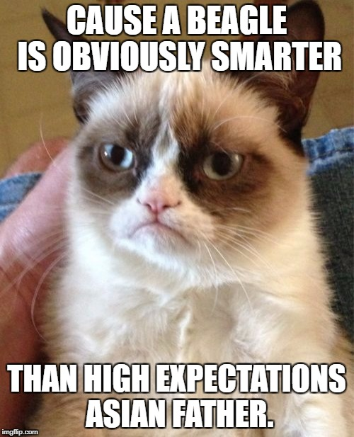 Grumpy Cat Meme | CAUSE A BEAGLE IS OBVIOUSLY SMARTER THAN HIGH EXPECTATIONS ASIAN FATHER. | image tagged in memes,grumpy cat | made w/ Imgflip meme maker