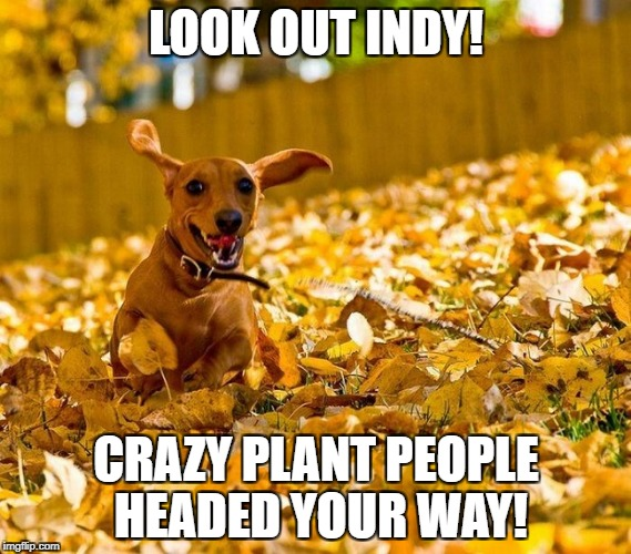 Indy | LOOK OUT INDY! CRAZY PLANT PEOPLE HEADED YOUR WAY! | image tagged in plants,juice,nutrition | made w/ Imgflip meme maker