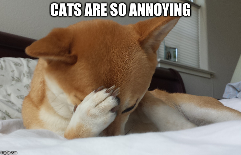 CATS ARE SO ANNOYING | made w/ Imgflip meme maker