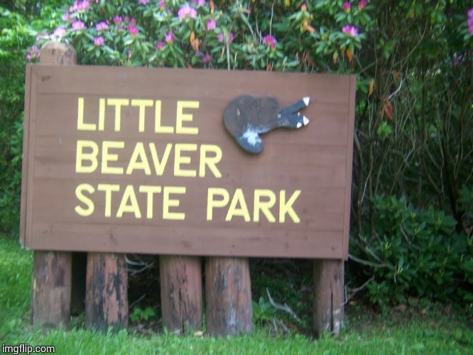 Little Beaver State Park | image tagged in loyalsockatxhamster,beaver,fun stuff,parks and rec,funny signs | made w/ Imgflip meme maker