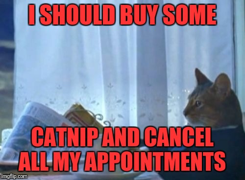 I Should Buy A Boat Cat Meme | I SHOULD BUY SOME CATNIP AND CANCEL ALL MY APPOINTMENTS | image tagged in memes,i should buy a boat cat | made w/ Imgflip meme maker