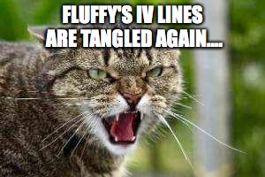 Angry Cat | FLUFFY'S IV LINES ARE TANGLED AGAIN.... | image tagged in angry cat | made w/ Imgflip meme maker