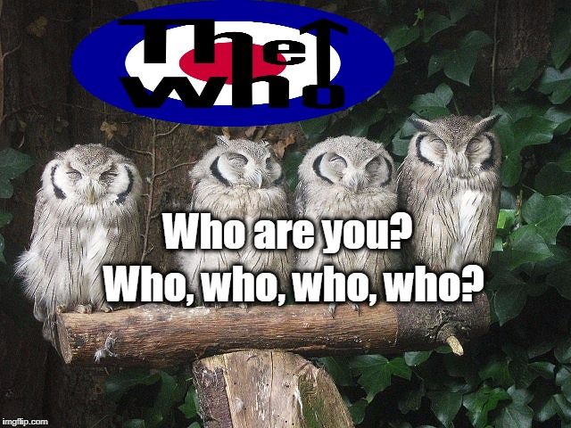 Who are you? Who, who, who, who? | image tagged in funny,funny meme,owls,singing,the who | made w/ Imgflip meme maker