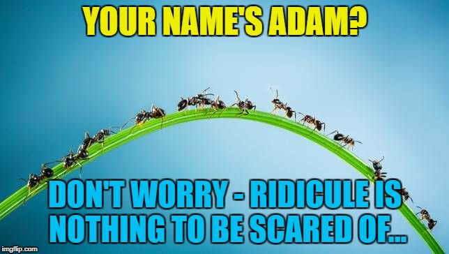 Repost week - post a meme that didn't do as well as you hoped and it may do better... | YOUR NAME'S ADAM? DON'T WORRY - RIDICULE IS NOTHING TO BE SCARED OF... | image tagged in immigrant invading ants,memes,adam ant,music,second chance week,repost week | made w/ Imgflip meme maker