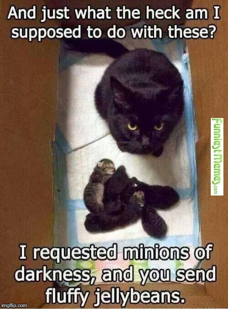 But their so cute  | image tagged in cats,kitten,world domination | made w/ Imgflip meme maker